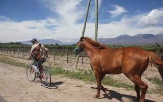 OTWR_Argentine_056